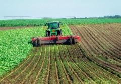 В 2018 году кубанские фермеры произвели сельхозпродукции на 78 млрд рублей