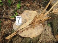 В Адыгее 28-летний парень осужден за незаконную рубку лесных насаждений