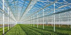 В Краснодарском крае работает около 20 крупных тепличных комплексов