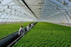 Краснодарский край лидирует в овощеводстве защищенного грунта