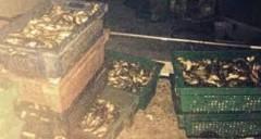 На Кубани пограничники завели дело за незаконную рыбалку в Азовском море