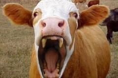 Карантин по бешенству животных отменен в донском хуторе Петровском
