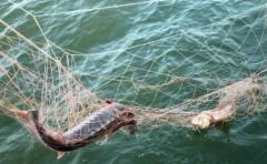 На Кубани росгвардейцы и полицейские задержали 11 браконьеров