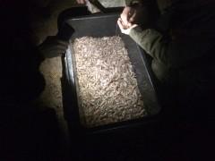 Пограничники задержали рыбаков, незаконно выловивших креветки на 1,5 млн рублей