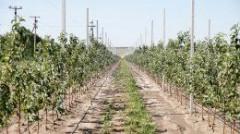 Коренное улучшение сельскохозяйственных земель Кубани