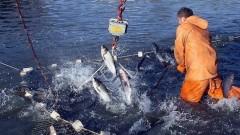 В следующем году Кубань планирует увеличить производство товарной рыбы до 15,5 тысяч тонн