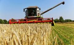 Производство товаров АПК Кубани через год достигнет 502 млрд рублей