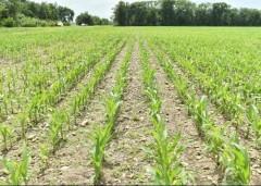 Сохранение плодородия сельхозземель на Кубани