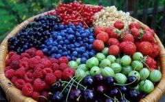 Объемы производства плодово-ягодной продукции и закладки садов на Кубани растут с каждым годом