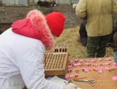Донские пограничники задержали отару овец, рогатых мигрантов из Украины исследуют ветспециалисты