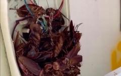 Австралиец обнаружил в телефоне полчище огромных тараканов