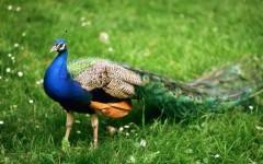 Невинномысский парк «Шерстяник» примет новых обитателей