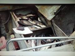 Двое кубанцев осуждены за незаконную рыбалку в Таганрогском заливе