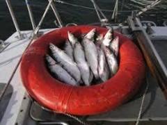 В азовских лиманах Кубани с 1 марта вылов рыбы запрещен