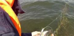На Кубани пограничники выпустили из браконьерских сетей рыбы на 850 тысяч рублей