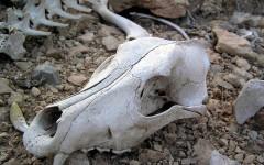 Информация о несанкционированной свалке трупов животных в Александровской роще не подтвердилась