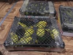 Донские пограничники пресекли контрабанду попугаев на 150 тысяч рублей
