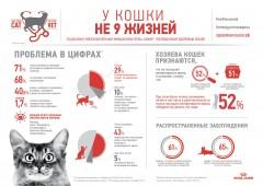 В Краснодаре стартовал месяц здоровья кошек