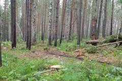 Разработан проект «Сохранение лесов Краснодарского края»