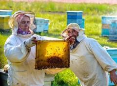 В Сочинском нацпарке пройдет брифинг на тему взаимодействия с пчеловодами