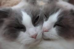 За месяц льготной стерилизации в Ростове прооперировали 475 котов и кошек