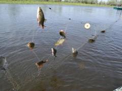 Пограничники пресекли незаконную рыбную ловлю в Таганрогском заливе
