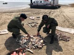 Донские пограничники задержал троих рыбаков с незаконным уловом на 300 тыс. рублей
