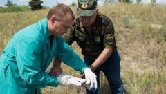 На границе России с Украиной донские ветврачи проводят иммунизацию диких животных против бешенства