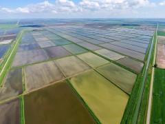 На Кубани приступили к севу риса
