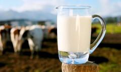 Аграриям Кубани выделят субсидии на молоко