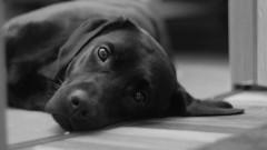 В Нефтекумске 61-летний мужчина обвиняется убийстве своего знакомого из-за собаки