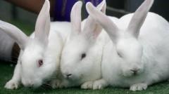 На Кубани запустили кролиководческую ферму
