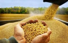 Кубанские аграрии планируют заготовить около 2,5 млн тонн кормов