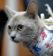 Донские ветврачи открыли запись на день льготной стерилизации собак и кошек