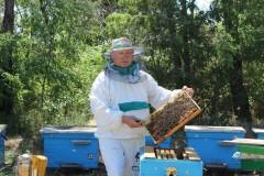 Донские ветврачи проверяют на болезни тысячи пчел