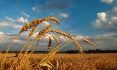 Сельхозпроизводство - прогнозы