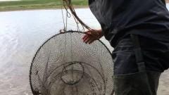Житель Темрюкского района Кубани может лишиться свободы за браконьерство
