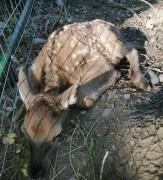 В невинномысском парке «Шерстяник» появился на свет олененок