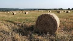 В реализации госпрограммы комплексного развития сельских территорий Кубани поможет Россельхозбанк