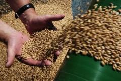 Качество кубанского урожая на порядок выше, чем в прошлом году