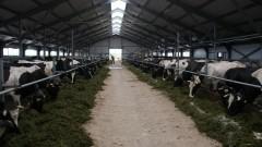 На Кубани планируют построить новый животноводческий центр