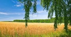 В Минераловодском округе Ставрополья проводят профилактические мероприятия по сохранению хлебных полей от огня