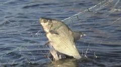 В Темрюкском районе Кубани осуждены двое браконьеров