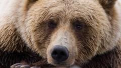 В Североморске люди не могли прогнать медведя, зашедшего в парк