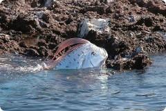 В России впервые выловили «предвестника цунами» рыбу-ремень