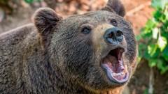 На Ямале медведь стал постоянным гостем столовой, отбив аппетит рабочим