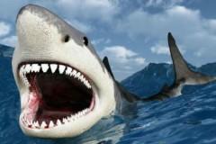 В Турции рыбаки выловили акулу весом в 1 тонну