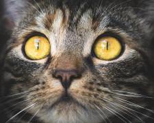 Опрос показал, что россияне предпочитают заводить дома кошек