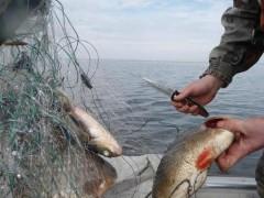 Донские пограничники поймали браконьера с уловом на полмиллиона рублей