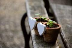 Госдума приняла закон о налоговых льготах для садоводов
